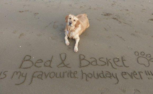Dog-friendly holidays in