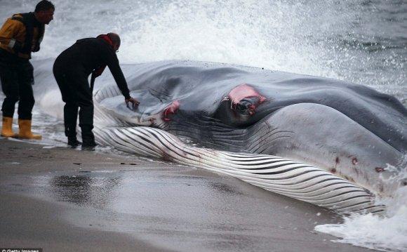 Heartbreaking: Rescuers