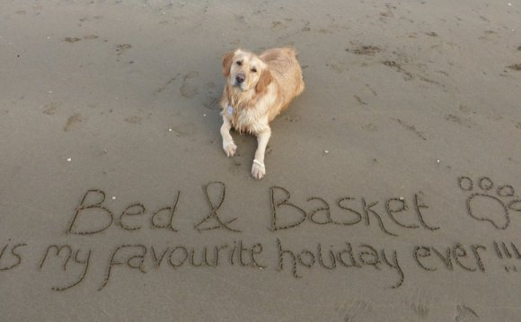 Self catering Dog friendly Cornwall