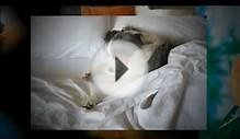 Dog Friendly Bed & Breakfast Finder at TripsWithPets.com